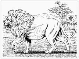 Small Picture 24 Realistic Lion Coloring Pages Animals printable coloring pages