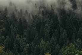 Behang Bomen Groen Mist Bos Sluier Bovenaanzicht Hd Breedbeeld