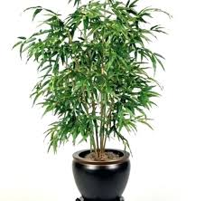 small office plant. Small Office Plant Amazing House Plants Low Light For Houseplants Trees Best Indoor Palms Images On Potted
