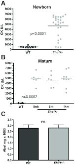 Ehd1 Heterozygous Mice Have Elevated Creatine Kinase Levels
