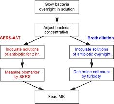 Gram Positive Antibiotics Chart Rapid Bacterial Antibiotic Susceptibility Test Based On