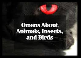 Lucky Animal Chart Animal Insect And Bird Omens And Their Meanings Exemplore