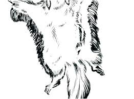 Kids Squirrel Coloring Pages To Print Out For Adults Free Fresh Page