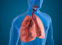 Resultado de imagem para cancer de pulmão gov