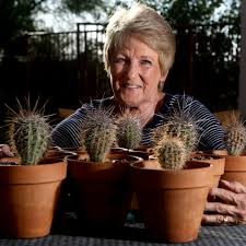 Want To Leave A Desert Legacy Grow A Saguaro Home