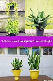 10 best low light indoor plants that