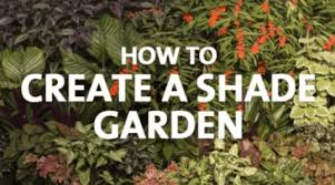 how to grow a shade garden palmers