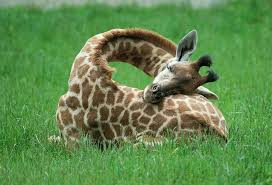 Image result for animals sleeping