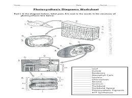 Photosynthesis Chart Worksheet Photosynthesis Diagram Worksheets Katyphotoart Com