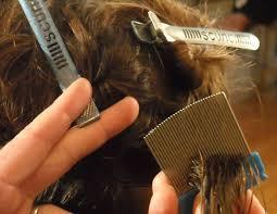 does hair dye kill lice or nits nits