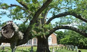What The Death Of An Oak Tree Can Teach Us About Mortality