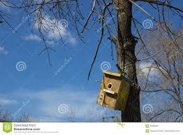 Volière En Bois Faite Maison Sur Un Tronc D Arbre Contre Le Ciel Avec C
