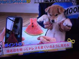 「インスタ映え 犬」の画像検索結果