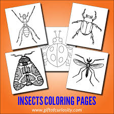 The insect type that is wingless is most to be found.they include nonparasitic and the parasitic type of insects.the parasitic insects are often found living in mammals. Insects Coloring Pages Gift Of Curiosity