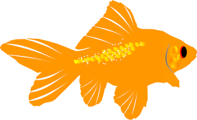 gold fish clip art. Beautiful Clip Goldfish To Gold Fish Clip Art D
