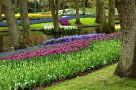 spring bulbs when is the best time to