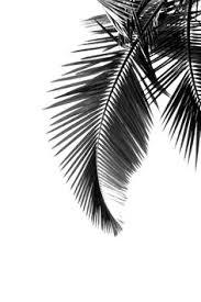 leaf black and white. black | 黒 kuro nero noir preto ebony sable leaf and white i