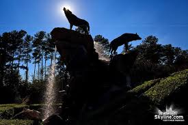 Nc State Wolfpack Statue And Fountain At Carter Finley