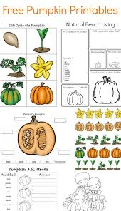 Teaching About Pumpkins Life Cycle Free