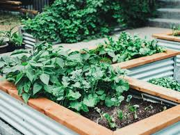 before you build raised beds for gardening