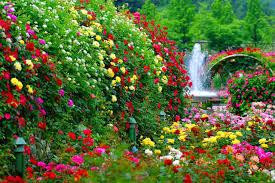 flower garden full hd photos