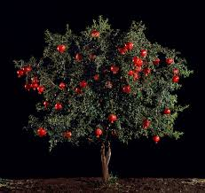 Something You Should Seeu2026 Light From The Middle East New Iranian Fruit Trees