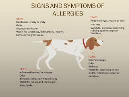 ALLERGIES - Dalton Veterinary Associates