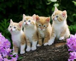 cute kittens and puppies together wallpaper. Fine Cute Cats And Kittens Dogs Puppies Images Inside Cute And Together Wallpaper
