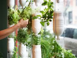Kitchen Garden Herbs Kitchen Smart Hanging Hydroponic Kitchen Garden Herbs For Indoor