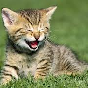 cute kittens playing wallpaper.  Playing Cute Kitten Wallpapers HD To Kittens Playing Wallpaper P