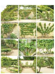 Flowers And Weeds Espalier Fruit Trees  You Can Grow ThatGrowing Cordon Fruit Trees