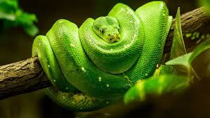 There are many kinds of snakes for sale in the world and many of them are beautiful and exotic. World Snake Day 2017 Protect The Snakes The Great Projects