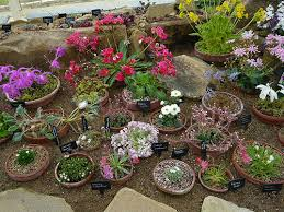 Small Picture Small Easy Rock Gardens Rock Gardens in Miniature Gardeners