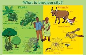 Image result for biodiversity