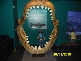 real underwater world. Beautiful World Sea Life Sunshine Coast Yes Its A Sharks Jaw To Real Underwater World N