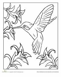 Small Picture dot trace bird tracing worksheets printables Pinterest