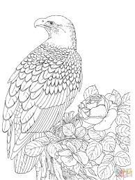 Small Picture Bald Eagle Line Drawing Realistic Bald Eagle Coloring Page Free