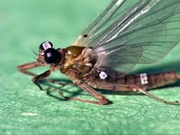 Fly Fishing Great Smoky Mountain Park Aquatic Insect Hatches