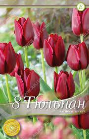 National Velvet | Тюльпаны Триумф. Семена многолетние