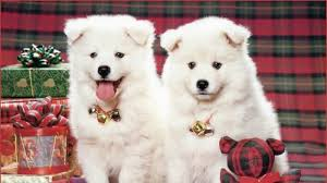 most beautiful dogs wallpapers. Exellent Wallpapers Beautiful Wallpapers For Desktop HD Puppies Dogs Wallpapers  1600x900 And Most