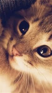 cat wallpaper iphone 5. Delighful Cat 1796 17 Cute Cat Kitten Nature Animal Warm Macro IPhone 5scse  SE Wallpaper On Iphone 5