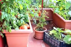 Container Garden Design New Design Ideas