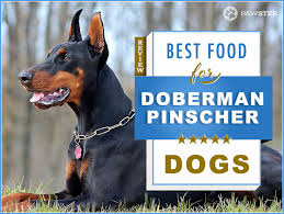 8 Best Foods To Feed Your Adult And Puppy Doberman Pinscher