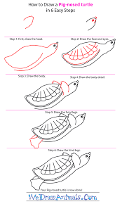 Small Picture How to Draw a Pig Nosed Turtle