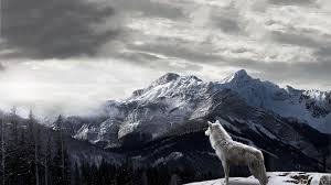 If you have your own one, just send us the image and we will show. Wolf Desktop Wallpapers Top Free Wolf Desktop Backgrounds Wallpaperaccess