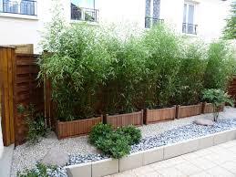 Prix Bambou En Pot Pivoine Etc Bambou Fargesia En Pot Pour Terrasse