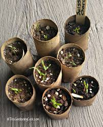 frugal seed starting pots and