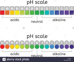 Vector Ph Scale Of Acidic Neutral And Alkaline Value Chart