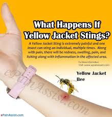yellow jacket sting swelling