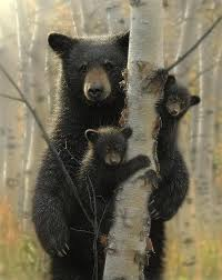 Image result for IMAGES mother bear and 3 cubs gif